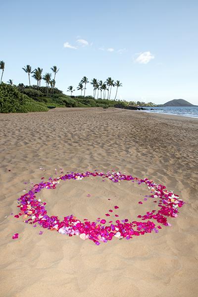 circle of flower petals