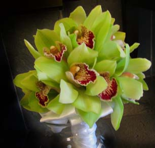 green_cymbidiums
