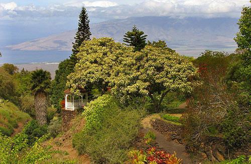 Garden wedding on Maui with gazebo